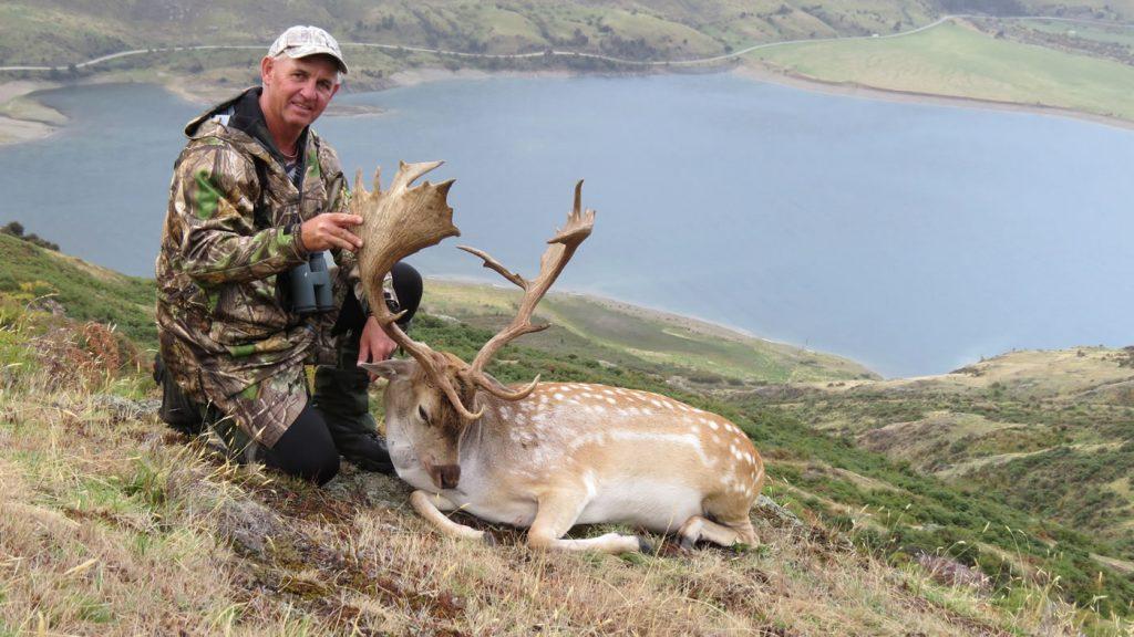 Fallow deer hunting trophy fallow deer buck