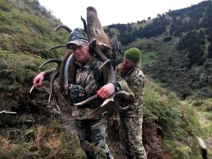 New Zealand Hunting packages red stag tahr chamois and more
